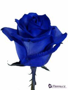modra-ruze