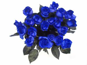 modra-ruze-kytka